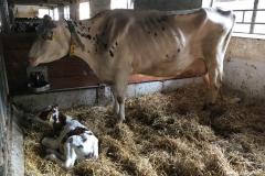 Bauernhof_Olk_290518 (11) (Kopie)