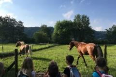 Wanderung_Zirkus Krone_160518 (9) (Kopie)